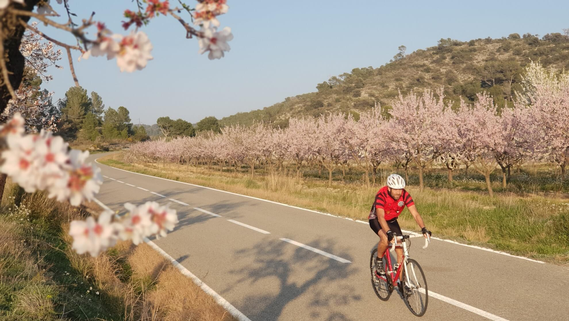 Bike through the blooming almond trees